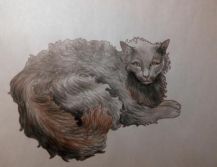 Cat series, part II